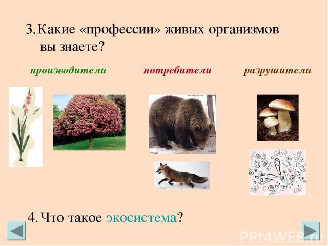 Какие «профессии» живых организмов вы знаете? производители потребители разрушители Что такое экосистема?