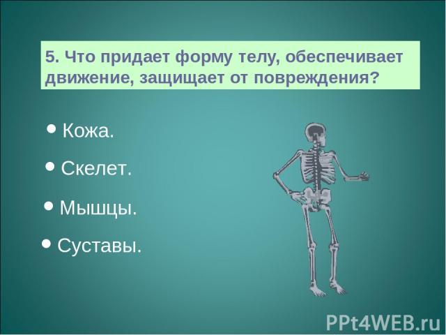 5. Что придает форму телу, обеспечивает движение, защищает от повреждения? Кожа. Скелет. Мышцы. Суставы.