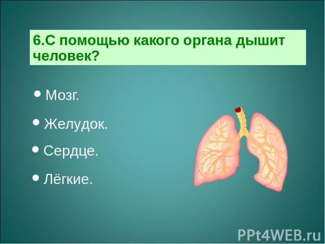 6.С помощью какого органа дышит человек? Мозг. Желудок. Сердце. Лёгкие.
