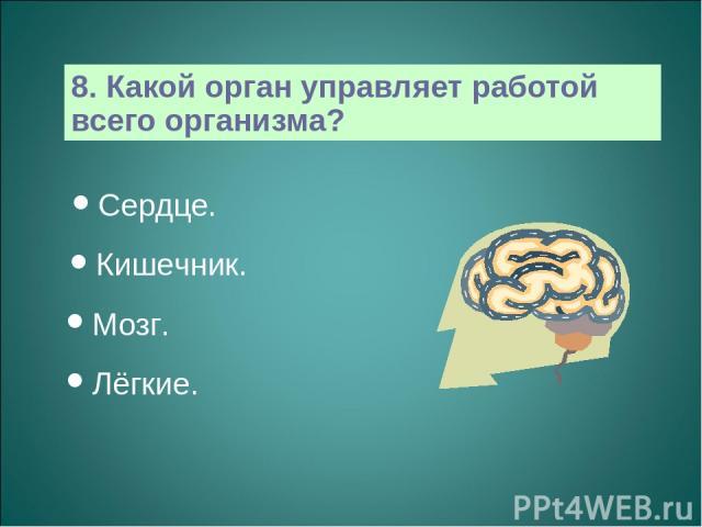 8. Какой орган управляет работой всего организма? Сердце. Кишечник. Мозг. Лёгкие.