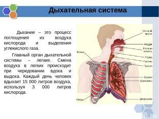 Дыхание – это процесс поглощения из воздуха кислорода и выделения углекислого га