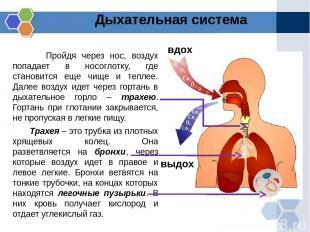 Пройдя через нос, воздух попадает в носоглотку, где становится еще чище и теплее