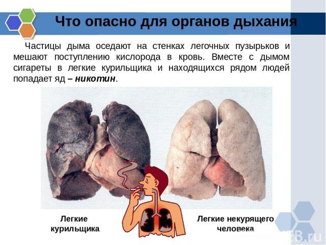 Что опасно для органов дыхания Частицы дыма оседают на стенках легочных пузырьков и мешают поступлению кислорода в кровь. Вместе с дымом сигареты в легкие курильщика и находящихся рядом людей попадает яд – никотин. Легкие курильщика Легкие некурящег…