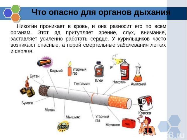Что опасно для органов дыхания Никотин проникает в кровь, и она разносит его по всем органам. Этот яд притупляет зрение, слух, внимание, заставляет усиленно работать сердце. У курильщиков часто возникают опасные, а порой смертельные заболевания легк…