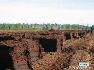 Торф Основные свойства: темно- коричневого цвета, состоит из остатков растений,
