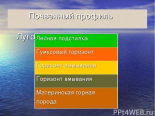 Почвенный профиль Луговой войлок,,,,,,,,,,,,, Лесная подстилка Гумусовый горизон