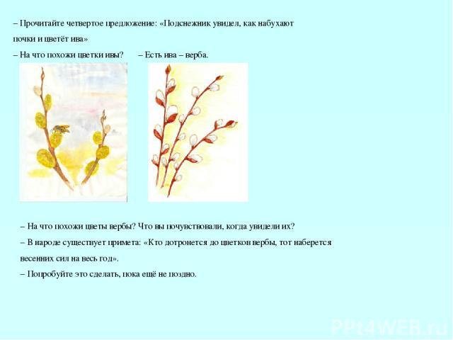 – Есть ива – верба. – Прочитайте четвертое предложение: «Подснежник увидел, как набухают почки и цветёт ива» – На что похожи цветки ивы? – На что похожи цветы вербы? Что вы почувствовали, когда увидели их? – В народе существует примета: «Кто дотроне…