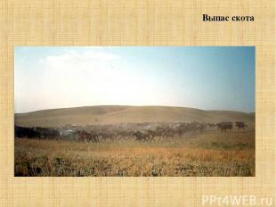 Выпас скота