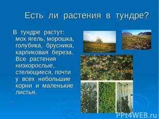Есть ли растения в тундре? В тундре растут: мох ягель, морошка, голубика, брусни