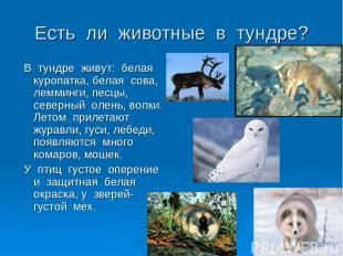 Есть ли животные в тундре? В тундре живут: белая куропатка, белая сова, лемминги