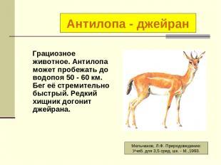 Грациозное животное. Антилопа может пробежать до водопоя 50 - 60 км. Бег её стре
