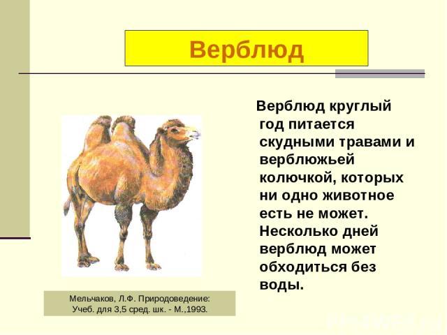 Верблюд круглый год питается скудными травами и верблюжьей колючкой, которых ни одно животное есть не может. Несколько дней верблюд может обходиться без воды. Верблюд Мельчаков, Л.Ф. Природоведение: Учеб. для 3,5 сред. шк. - М.,1993.