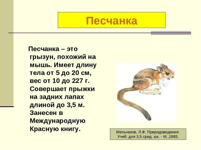 Песчанка – это грызун, похожий на мышь. Имеет длину тела от 5 до 20 см, вес от 10 до 227 г. Совершает прыжки на задних лапах длиной до 3,5 м. Занесен в Международную Красную книгу. Песчанка Мельчаков, Л.Ф. Природоведение: Учеб. для 3,5 сред. шк. - М…