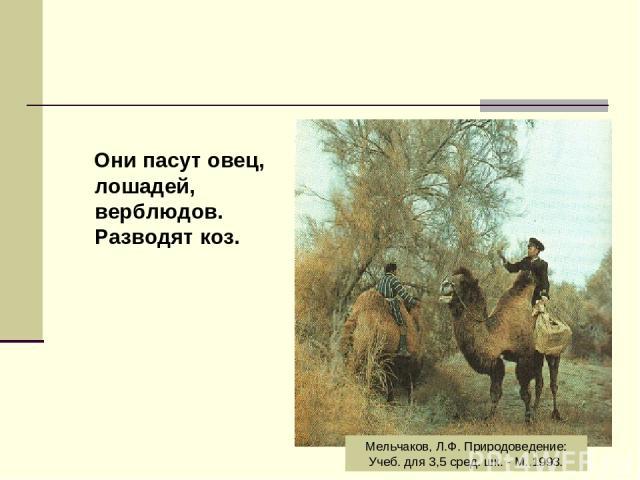Они пасут овец, лошадей, верблюдов. Разводят коз. Мельчаков, Л.Ф. Природоведение: Учеб. для 3,5 сред. шк. - М.,1993.