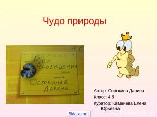Чудо природы Автор: Сорокина Дарина Класс: 4 б Куратор: Каменева Елена Юрьевна 5