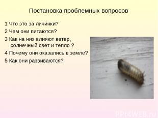 Постановка проблемных вопросов 1 Что это за личинки? 2 Чем они питаются? 3 Как н