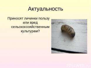 Актуальность Приносят личинки пользу или вред сельскохозяйственным культурам?