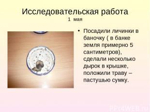 Исследовательская работа 1 мая Посадили личинки в баночку ( в банке земля пример
