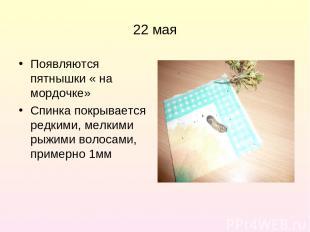 22 мая Появляются пятнышки « на мордочке» Спинка покрывается редкими, мелкими ры