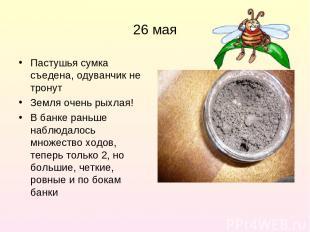 26 мая Пастушья сумка съедена, одуванчик не тронут Земля очень рыхлая! В банке р