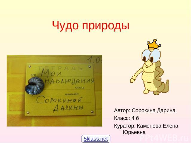Чудо природы Автор: Сорокина Дарина Класс: 4 б Куратор: Каменева Елена Юрьевна 5klass.net