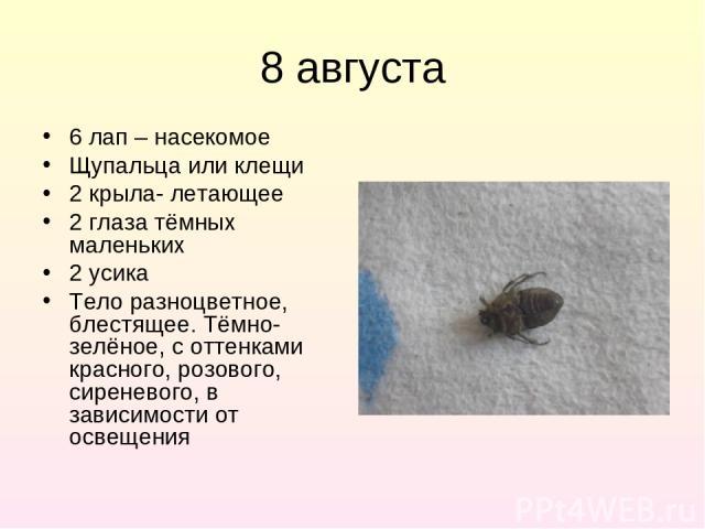 8 августа 6 лап – насекомое Щупальца или клещи 2 крыла- летающее 2 глаза тёмных маленьких 2 усика Тело разноцветное, блестящее. Тёмно-зелёное, с оттенками красного, розового, сиреневого, в зависимости от освещения