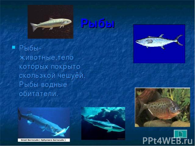 Рыбы Рыбы- животные,тело которых покрыто скользкой чешуёй. Рыбы водные обитатели.