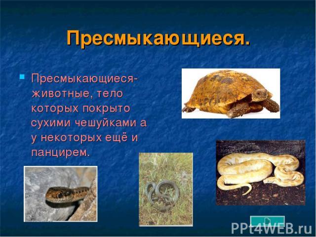 Пресмыкающиеся. Пресмыкающиеся- животные, тело которых покрыто сухими чешуйками а у некоторых ещё и панцирем.