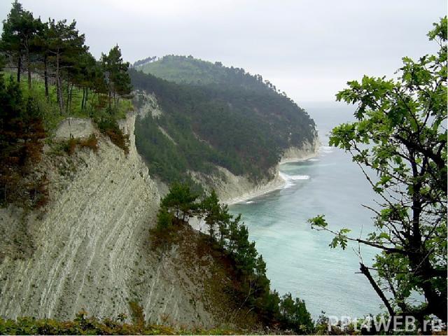 Отправляемся дальше, к Чёрному морю. Кто летом отдыхал на Чёрном море и может рассказать о природе этой местности? Каких животных вы там видели?