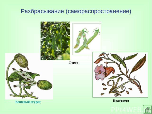 распространения семян и плодов растений