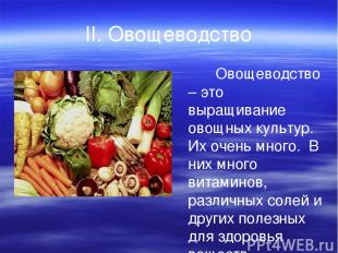 II. Овощеводство Овощеводство – это выращивание овощных культур. Их очень много.