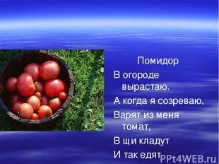 Помидор В огороде вырастаю. А когда я созреваю, Варят из меня томат, В щи кладут