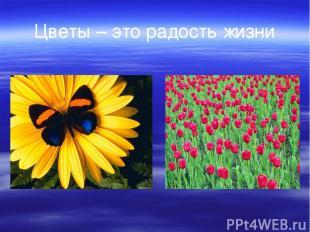 Цветы – это радость жизни