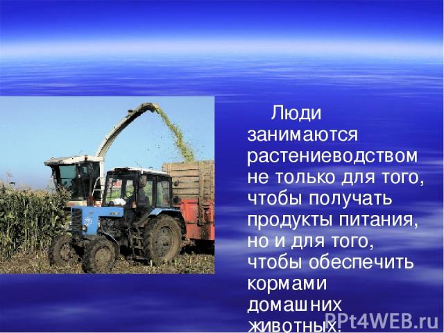 Люди занимаются растениеводством не только для того, чтобы получать продукты питания, но и для того, чтобы обеспечить кормами домашних животных.