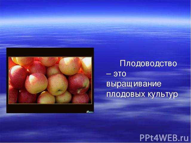 Плодоводство – это выращивание плодовых культур