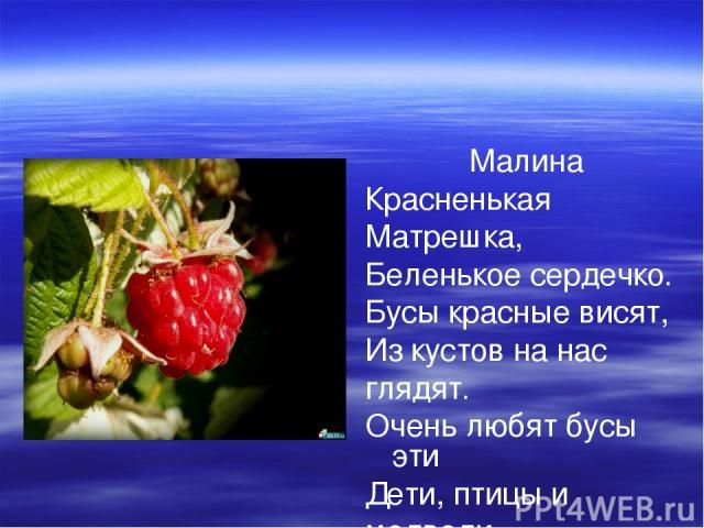 Малина Красненькая Матрешка, Беленькое сердечко. Бусы красные висят, Из кустов на нас глядят. Очень любят бусы эти Дети, птицы и медведи.