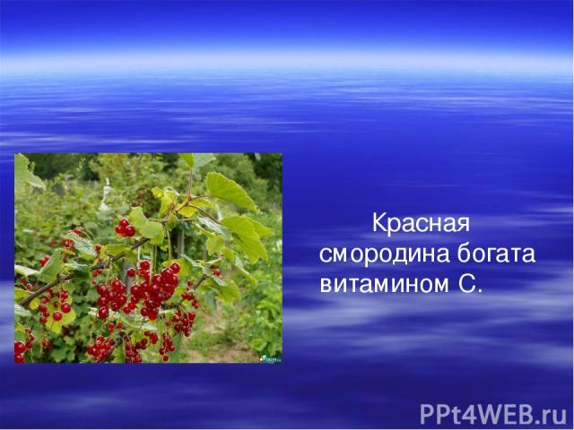 Красная смородина богата витамином С.