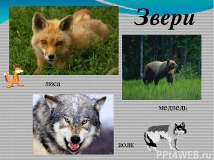 ЛУГ Место обитания животных Пища животных Пастбище для домашних животных Защита
