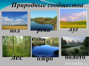 поле Природные сообщества река луг лес озеро болото