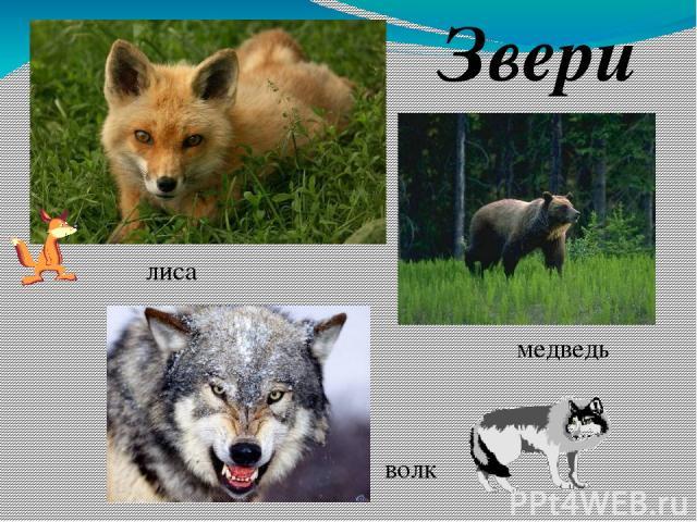ЛУГ Место обитания животных Пища животных Пастбище для домашних животных Защита и укрытие от хищников Лекарственные травы для животных