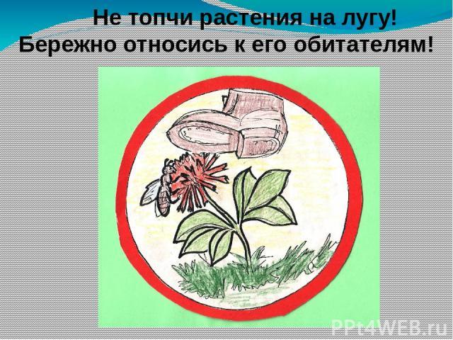 На лугу растут… у) только травянистые растения ф) мхи и лишайники х) кустарники и травянистые растения