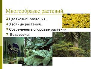 Многообразие растений. Цветковые растения. Хвойные растения. Современные споровы