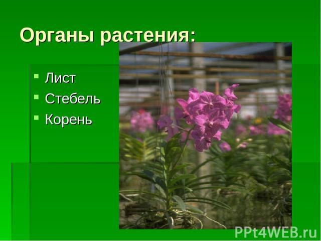 Органы растения: Лист Стебель Корень