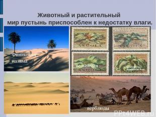 Животный и растительный мир пустынь приспособлен к недостатку влаги. Финиковая п