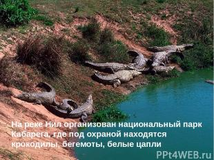 На реке Нил организован национальный парк Кабарега, где под охраной находятся кр