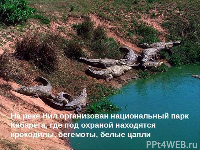 На реке Нил организован национальный парк Кабарега, где под охраной находятся крокодилы, бегемоты, белые цапли