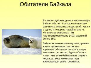 В самом глубоководном и чистом озере Байкал обитает большое количество различных