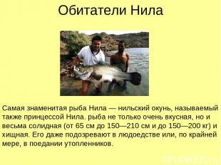 Обитатели Нила Самая знаменитая рыба Нила — нильский окунь, называемый также при