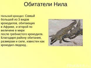 Обитатели Нила Нильский крокодил. Самый большой из 3 видов крокодилов, обитающих