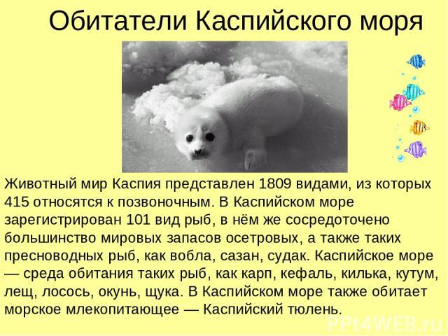 Обитатели Каспийского моря Животный мир Каспия представлен 1809 видами, из которых 415 относятся к позвоночным. В Каспийском море зарегистрирован 101 вид рыб, в нём же сосредоточено большинство мировых запасов осетровых, а также таких пресноводных р…